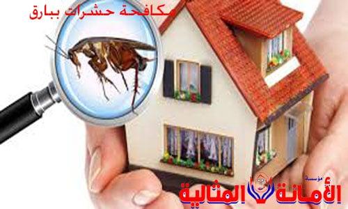 شركة مكافحة حشرات ببارق